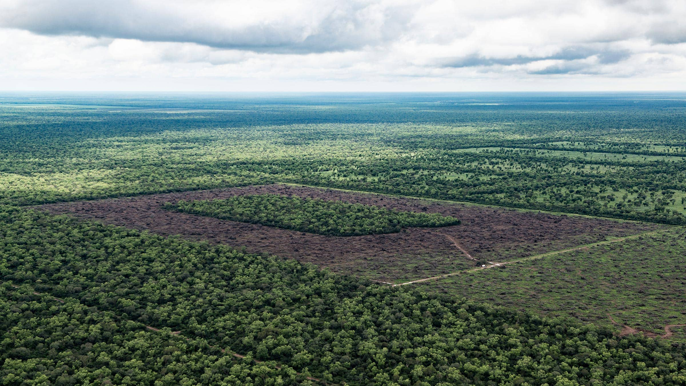 ilegal deforestation